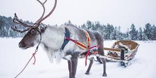 reindeers sledge